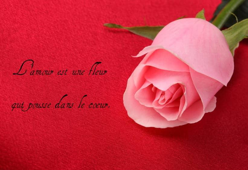 l'amour et une fleur belle citation