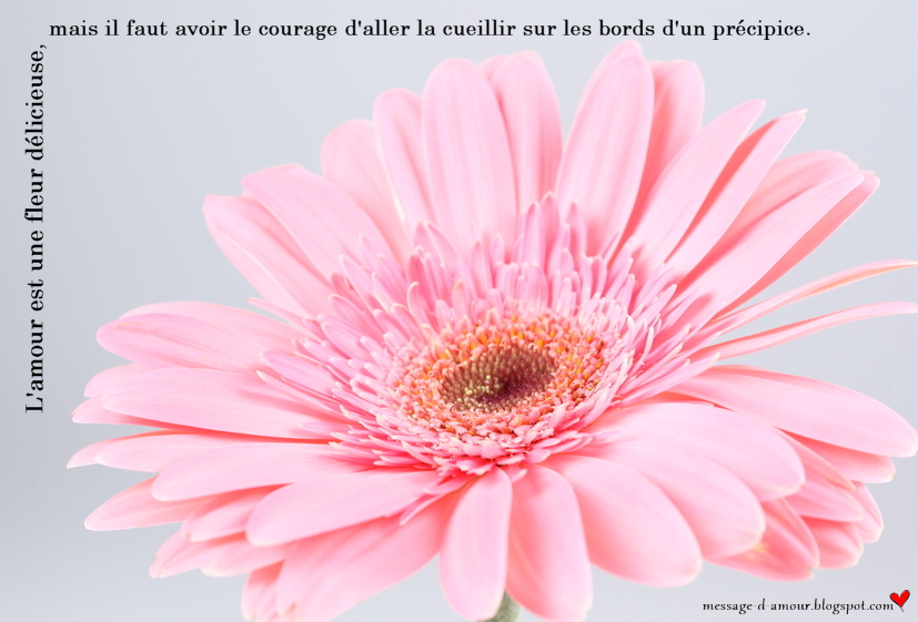 Citations Damour Jolies Cartes Message Damour