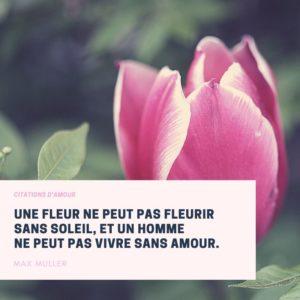Citation Amour Verte et Rose Fleur
